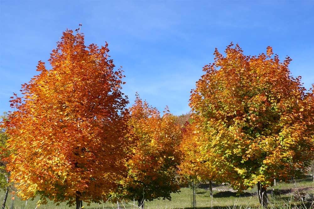 Photo d'arbres aux couleurs automnales