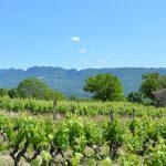 Photographie de Vignobles de la Clairette de Die