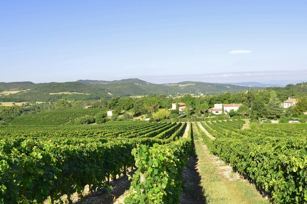 Photographie de Vignobles de la vallée de la Drôme