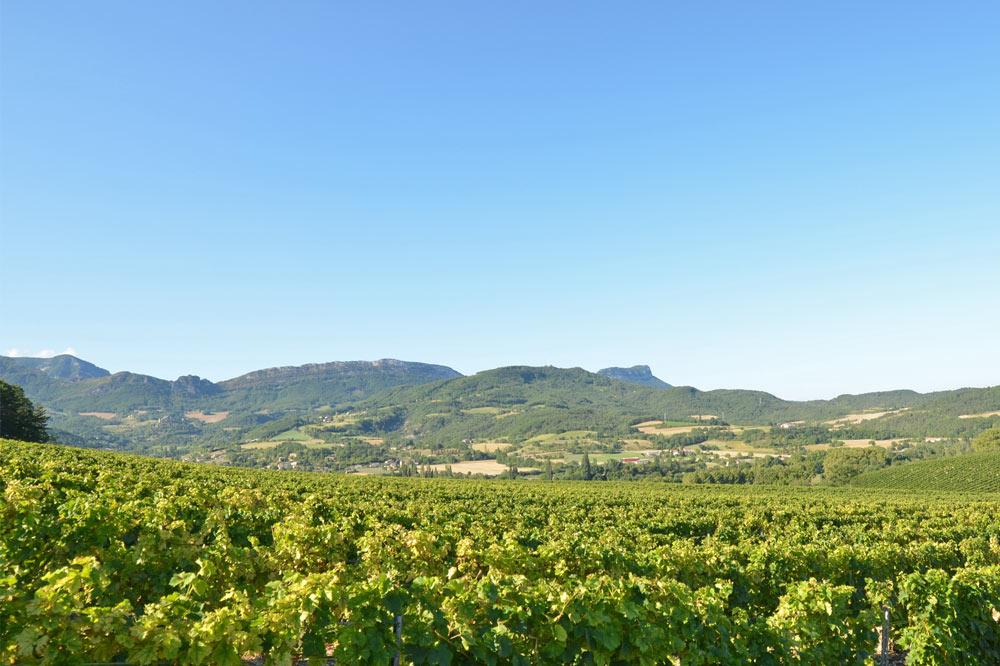Photoghraphie de vignobles ouverts sur la vallée de la Drôme
