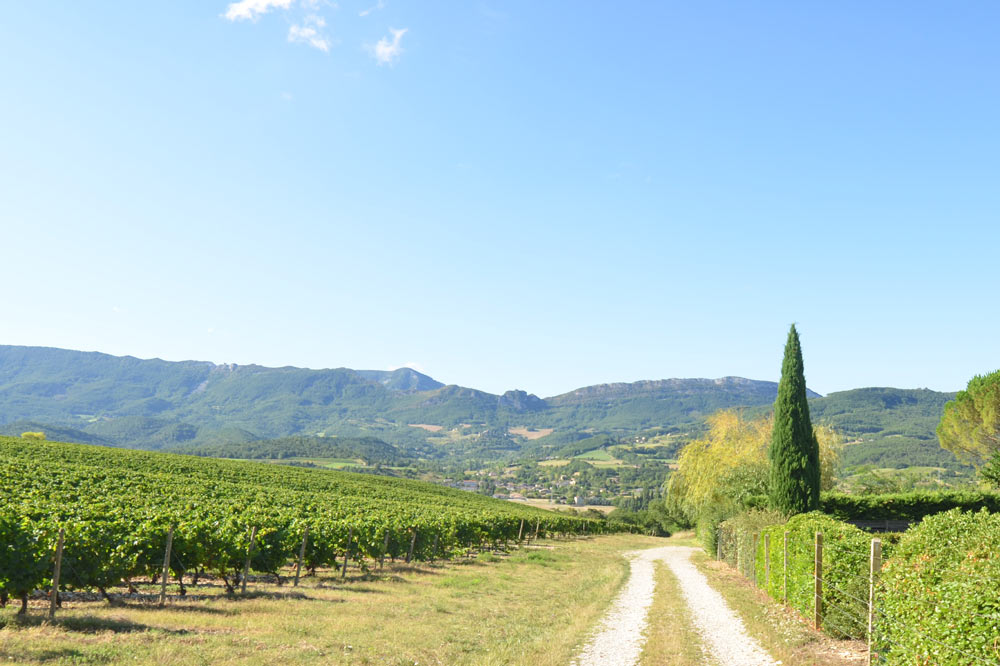Photographie d'un chemin bordé de Vignes avec vue sur la vallée de la Drôme